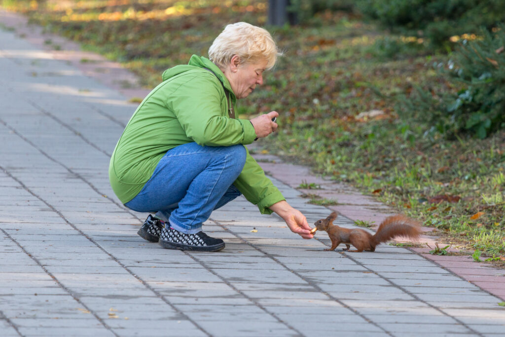 Older woman feeding a squirrel with a treat in the local park. Beauty in nature series.
