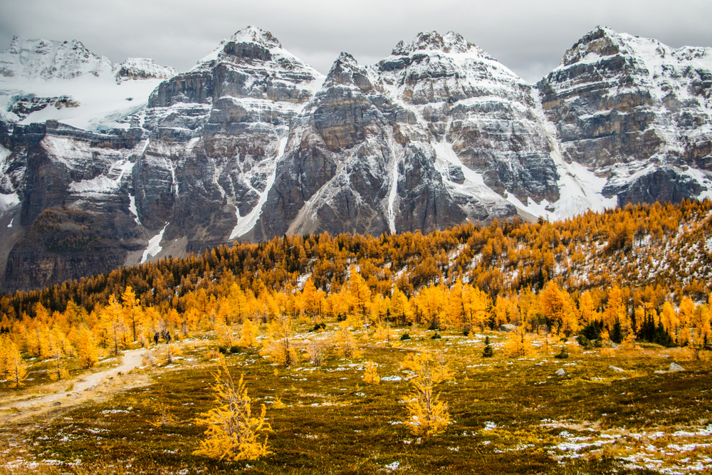 Larch valley in Lake Louise in Banff national park