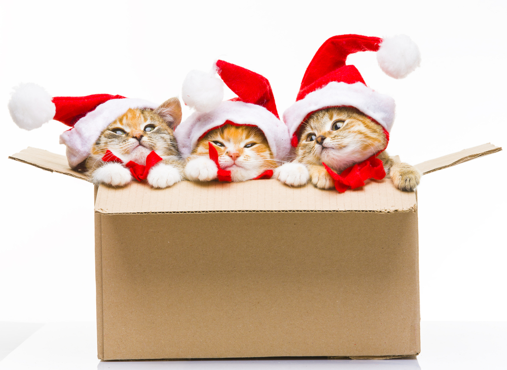 Kitten with Santa hats on in a box