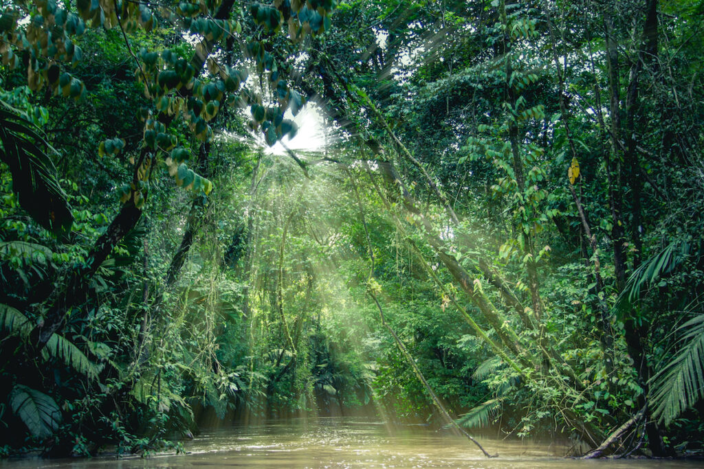Tortuguero National Park, Costa Rica, view of the rainforest from a boat in the canals iacomino.