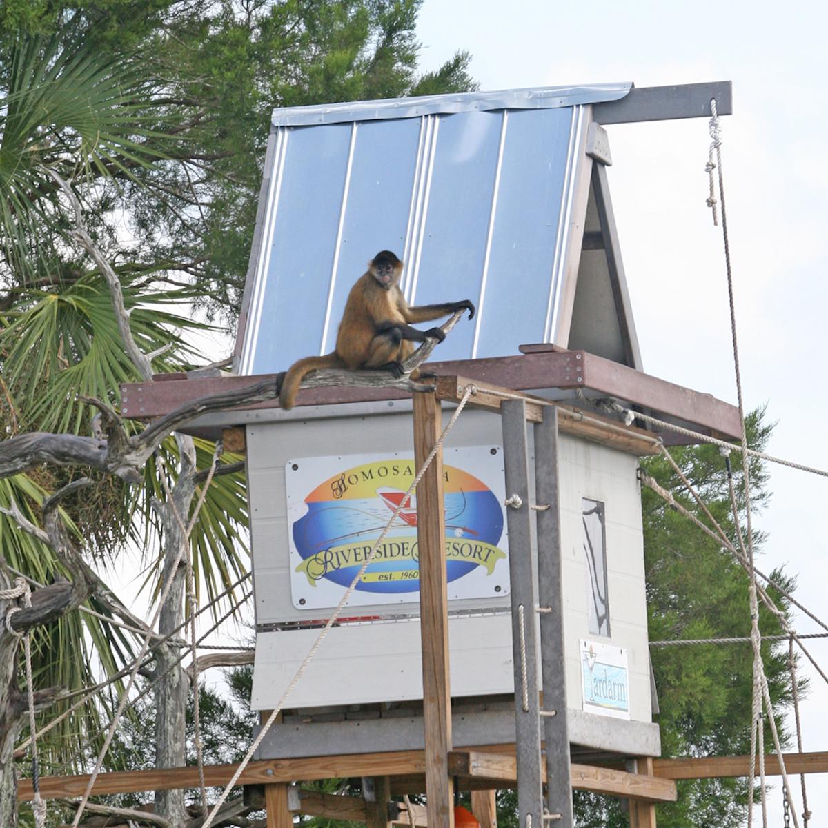 Monkey sitting at building on Monkey Island